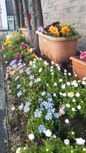 花壇の花です。